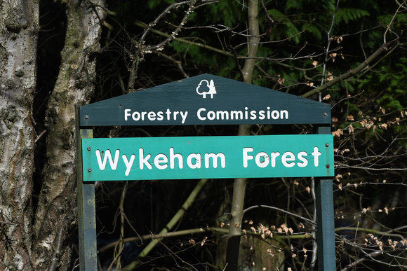 Wykeham Forest - April 2021
