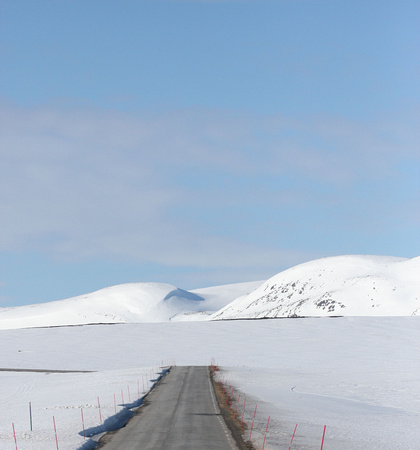 High tundra