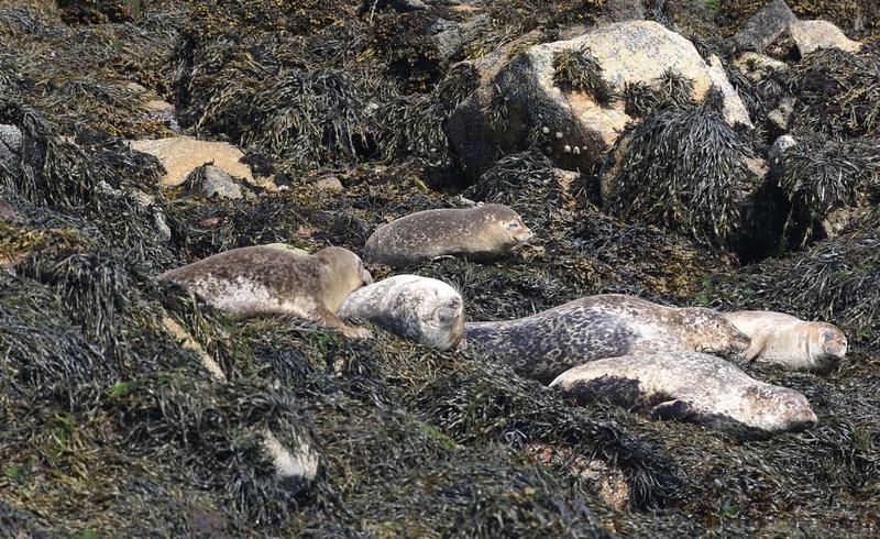 Common seal